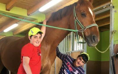Druženje s konjem Florijanom v Horse Resort Stariha