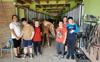 Druženje s konji in jahanje