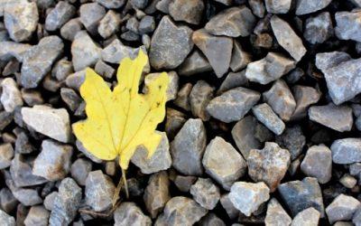 Barve jeseni